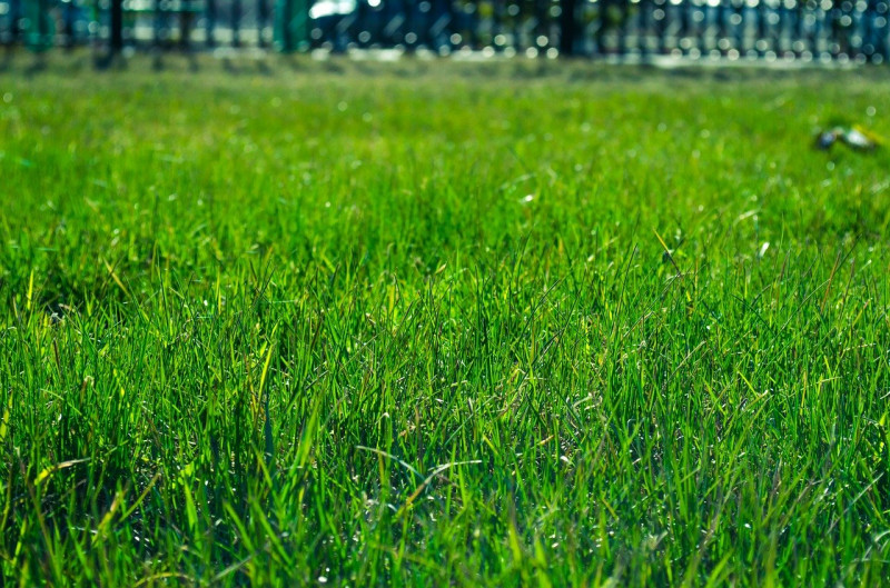 Sod or Seed: Which is Better?