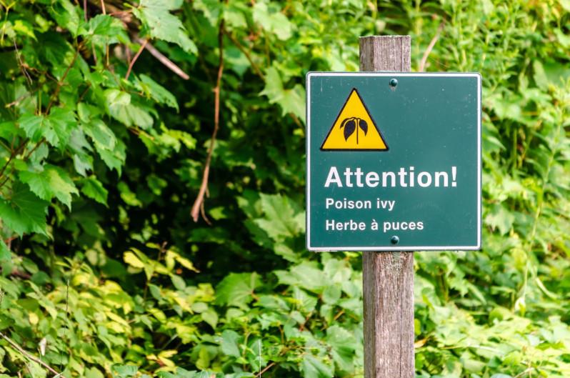 Summer Seasonal Tips: Poison Ivy, Be Gone