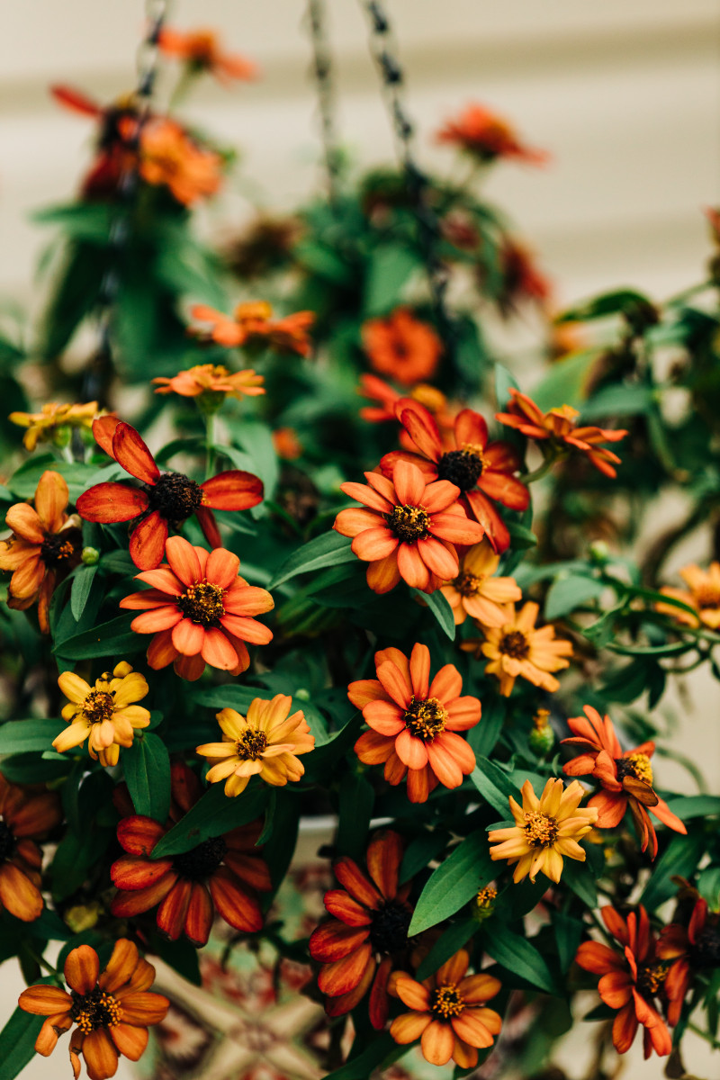 What To Plant For Fall